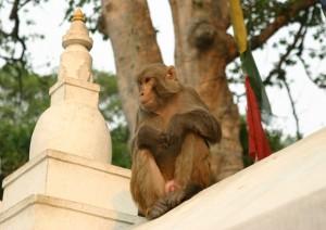 (lunedì) Arrivo A Kathmandu.jpg