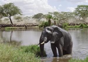 Cratere Del Ngorongoro.jpg