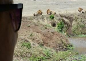 (03/01/2021) Karatu - Ngorongoro - Serengeti (circa 3h).jpg