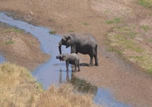 Parco Nazionale Del Ruaha (volo) Dar Es Salaam / Zanzibar.jpg