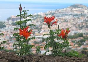 (02/01/2020) Madeira: Câmara De Lobos, São Vicente, Porto Moniz, Calheta.jpg