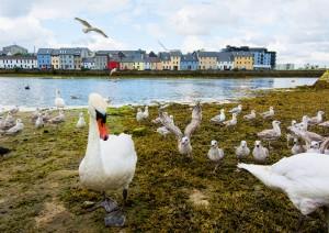 Lisdoonvarna - Galway - Donegal - Letterkenny (310 Km / 4h 50min).jpg