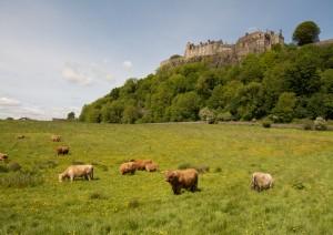Edimburgo - Culross - Stirling - Doune - Eilean Donan - Kyle Of Lochalsh (340 Km / 5h 15min).jpg