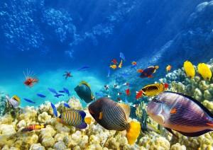 Cairns: Barriera Corallina.jpg