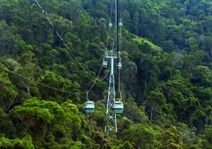 Cairns / Rainforest.jpg