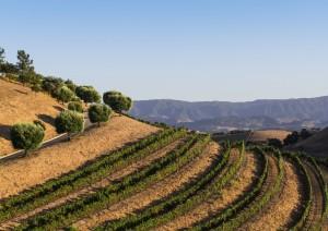 Santa Barbara - Santa Ynez Valley - Hearst Castle - San Simeon (240 Km / 3h 15min).jpg