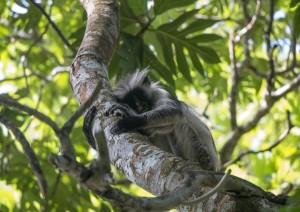 Zanzibar: Escursione Allo Jozani National Park.jpg