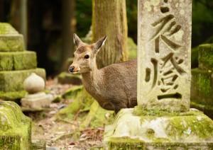 Kyoto - Nara - Kyoto.jpg