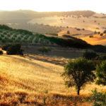 Paesaggio dell'Andalusia