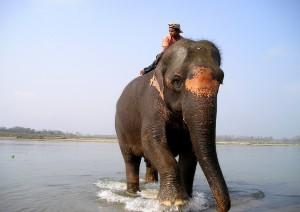Kathmandu - Chitwan (5h).jpg
