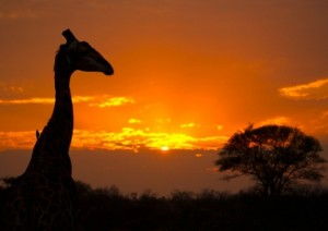 Parco Kruger.jpg