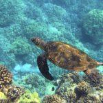Alle Hawaii è facile imbattersi nelle tartarughe marine