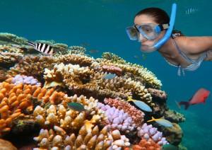 Cairns / Escursione Alla Barriera Corallina.jpg
