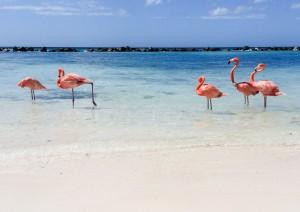 Aruba / Flamingo Beach.jpg