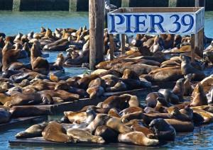 Monterey - San Francisco (205 Km).jpg