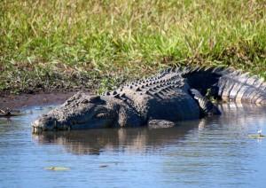 Kakadu National Park - Katherine (340 Km).jpg