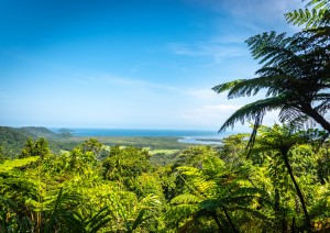 Cairns: Cape Tribulation E Daintree Tropical Forest.jpg