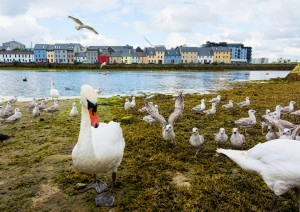Ballycastle - Silverstrand - Galway (140 Km / 2h 30min).jpg