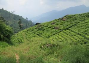 Nuwara Eliya - Kandy (80 Km / 2h 30min).jpg