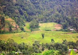 Colombo - Nuwara Eliya  (180 Km / 4h 30min).jpg