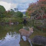 Nara, famosa per i suoi cervi