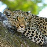 Avvistamenti nel Chobe