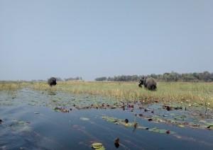 Okavango (volo) Kasane - Chobe.jpg