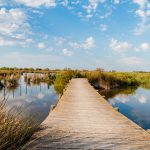 Natura e bellezza in Camargue