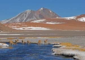 Escursione: Lagune Altiplaniche, Piedras Rojas, Laguna Chaxa.jpg