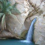 L'acqua color smeraldo che sgorga nel deserto a Chebika