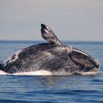 A Puerto Madryn, da luglio a dicembre, è possibile avvistare le balene