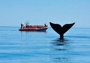 Puerto Madryn: Avvistamento Balene.jpg