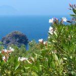 Fiori e natura delle Eolie