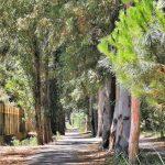 Pista ciclabile in mezzo agli alberi a Vasto