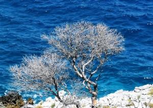 Termoli (traghetto) Isole Tremiti.jpg