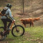 Bike tour tra i pascoli