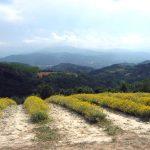Coltivazione di erbe officinali [Foto di Chiara Ronelli]