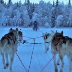 Slitta trainata dagli husky