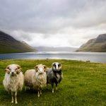 Paesaggio delle Faroe [Photo by Dylan Shaw on Unsplash]